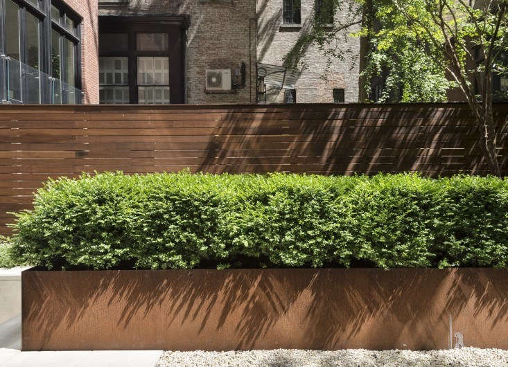 A Cor-Ten steel planter box overflows with Korean boxwood in a Manhattan garden by designer Julie Farris. Photograph by Matthew Williams.