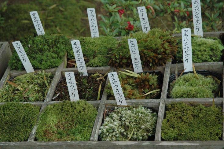 Moss Japan by su.bo via Flickr.