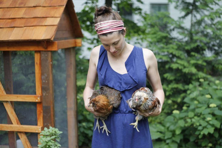 backyard-chickens-coop-christine-chitnis