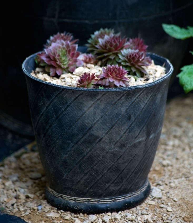 chris-moss-london-garden-succulents-gravel-rubber-tire-trug-gardenista