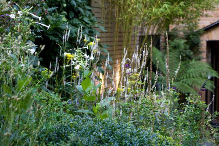 chris-moss-white-garden-verbena-nicotiana-salvia-gardenista