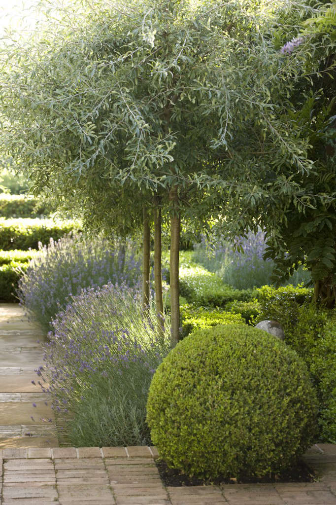 peter-fudge-olive-trees-lavender-boxwood-topiary-brick-path-gardenista