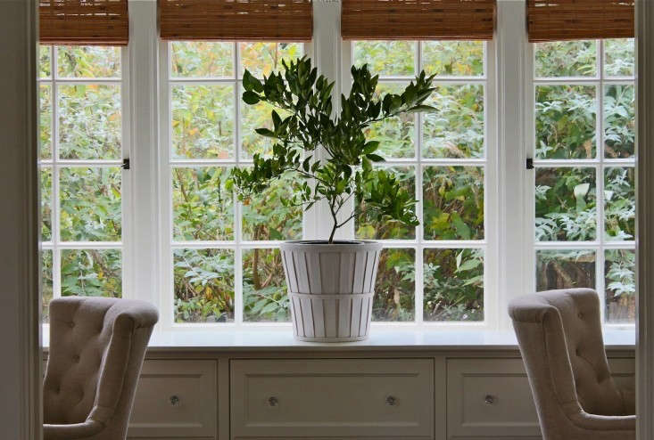 See more in How to Keep an Indoor Citrus Tree Happy. Photograph by Michelle Slatalla.