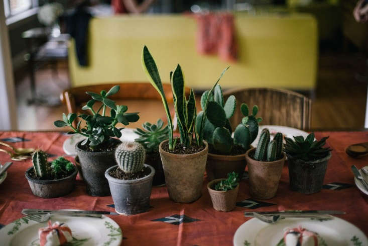 A collection of pint-size cacti (still in their pots) can move directly from the windowsill to the tabletop just before the guests arrive. Tiny is the key here: you you want guests to be able to look across the table without feeling as if they&#8