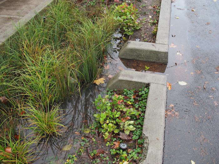 A curbside swale captures rainwater in Portland, Oregon. Photograph landscape designer Kristien Forness, from Every Garden Needs a Wetland (Well, at Least in Rainy Cities).