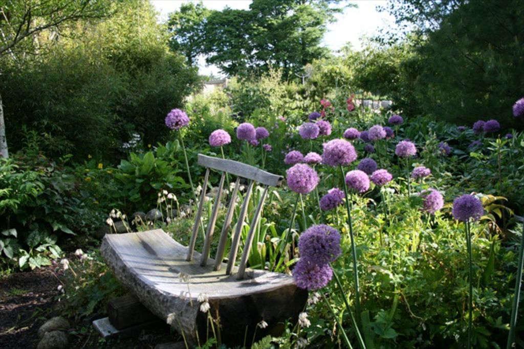 Alliums surround a garden bench in early summer.