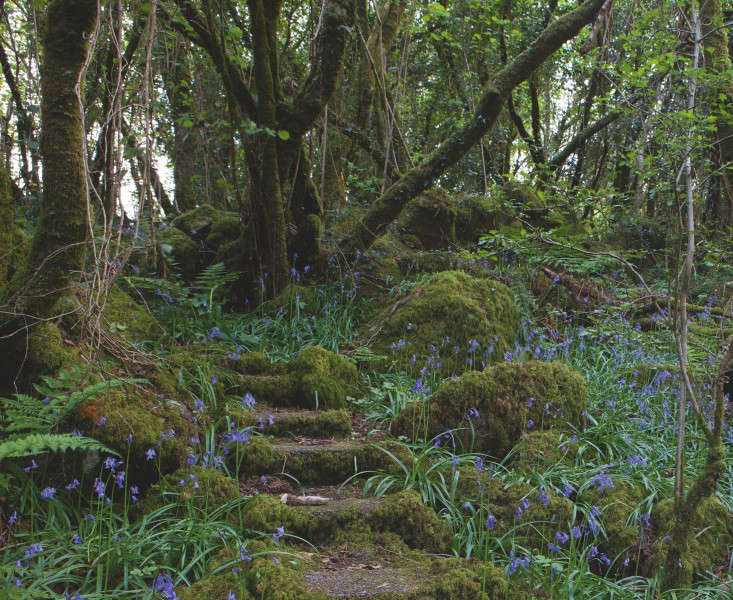mossy-stairs-ireland-gardenista
