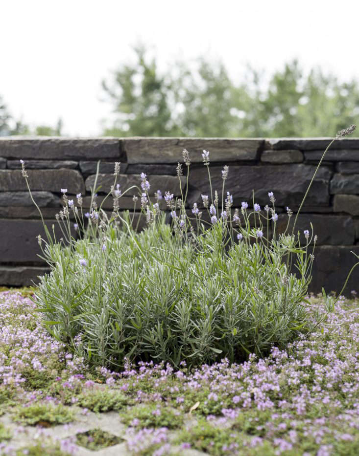 thyme-terrace-permeable-paving-matthew-williams
