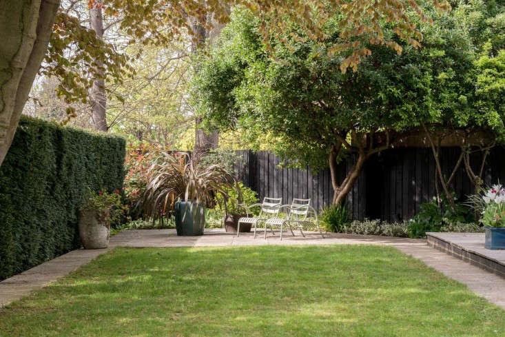 trees-london-backyard-lawn-hedges-themodernhouse-belsize-lane-gardenista