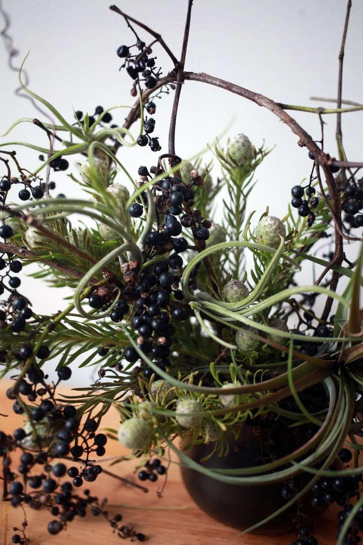 Sophia_Moreno_Bunge_Gardenista_Arrangement_DIY_Wild_Grape_Leucadendron