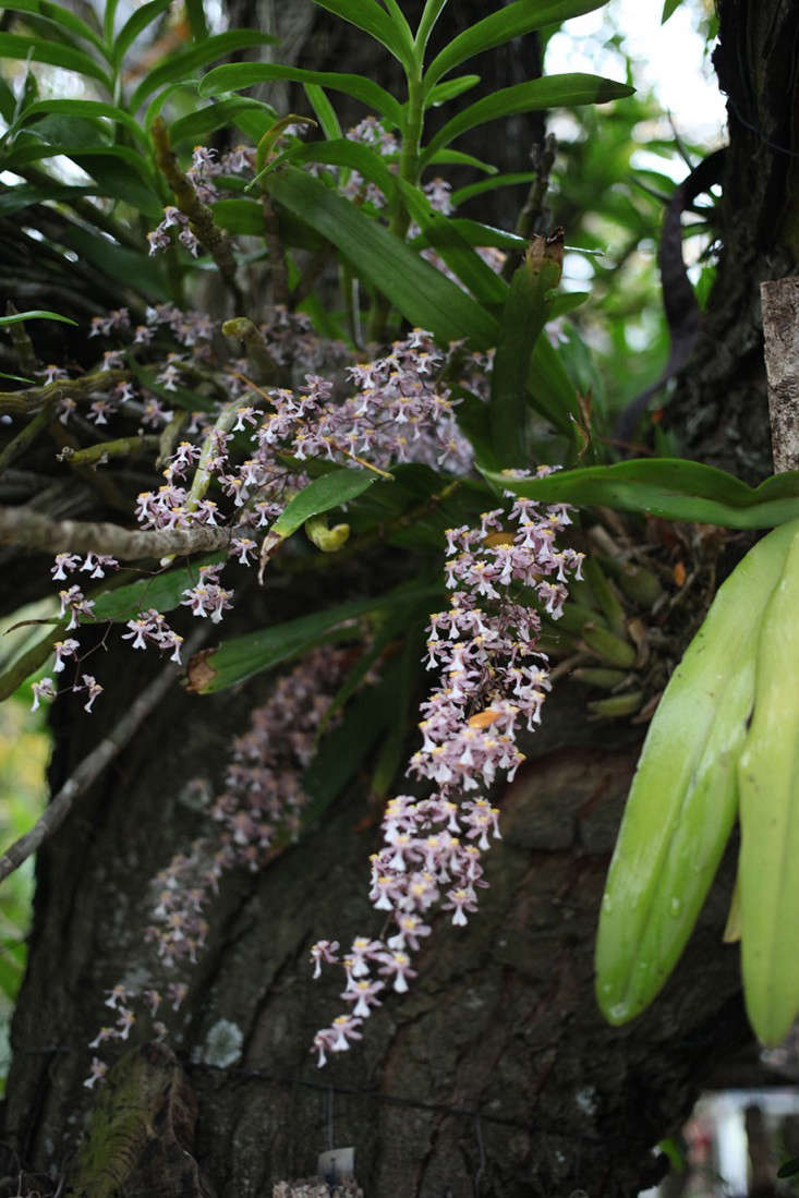 Oncidium orchids, like this one, are native to Argentina and other parts of South America.