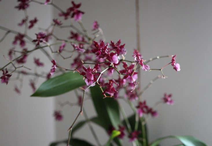 Sophia_Moreno_bunge_gardenista_orchid_DIY_final4