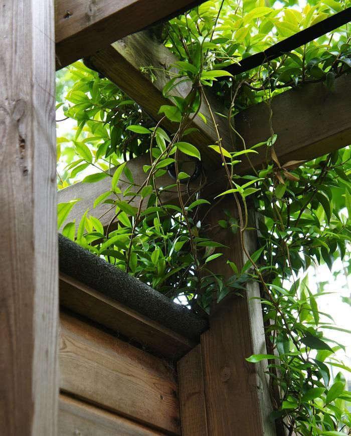 christine-hanway-garden-4-gardenista
