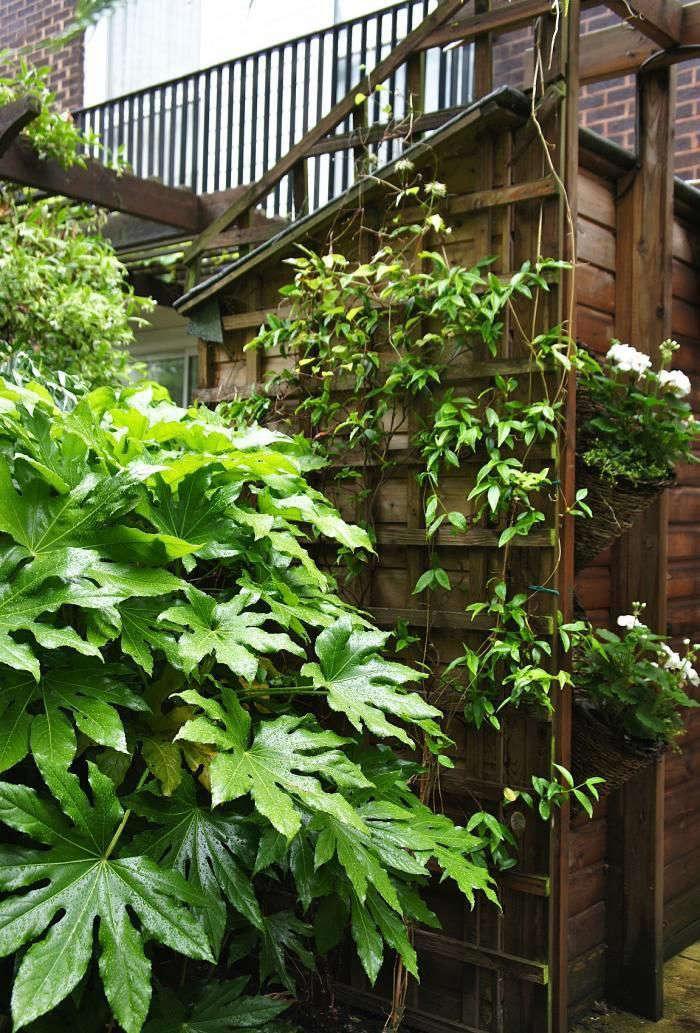christine-hanway-garden-5-gardenista