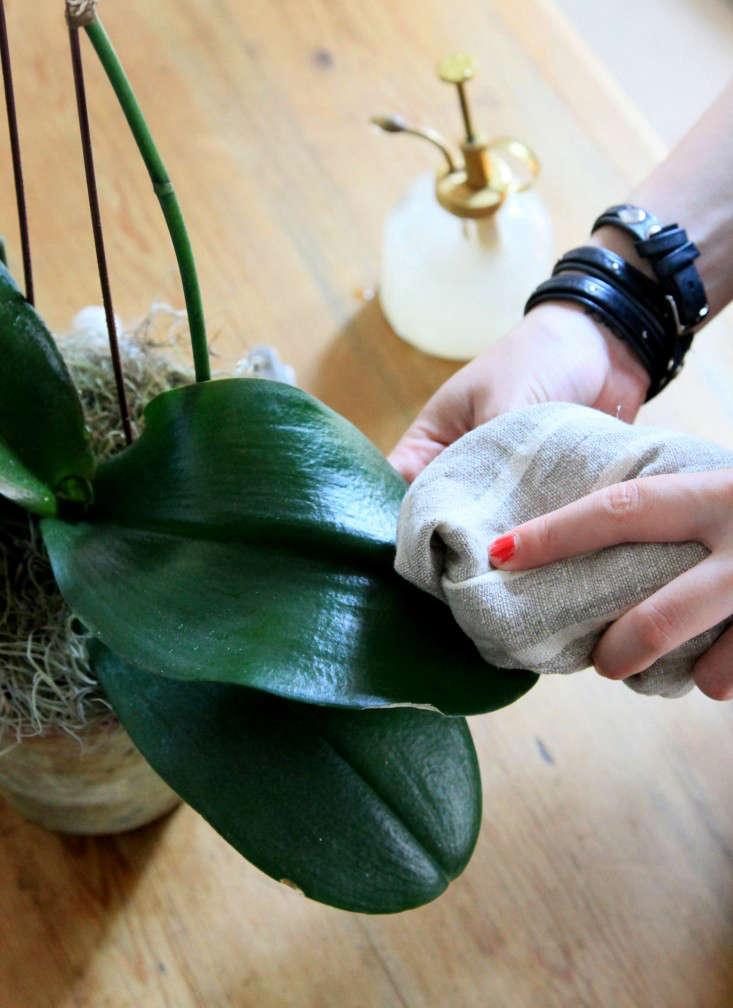 11-orchidcare-erinboyle-gardenista