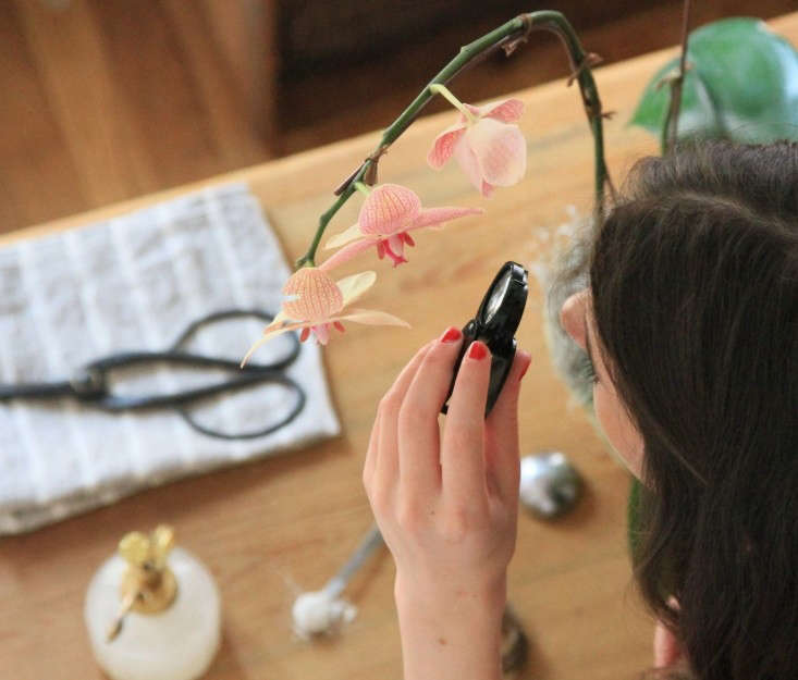 See tips for orchid care in The Orchid that Owned Me. Photograph by Erin Boyle.