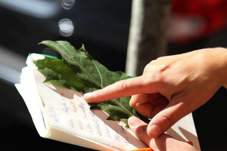 2-city-tree-identification-erinboyle-gardenista