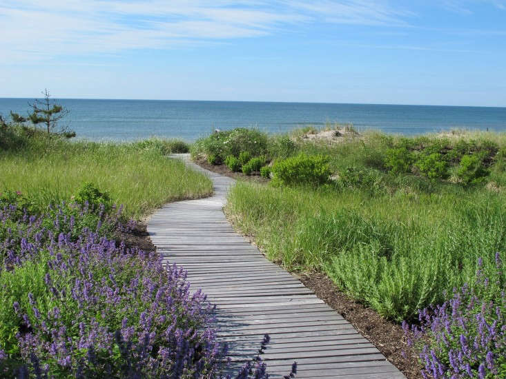 Another hardy choice: lavender. Read\10 Easy Pieces: Perennials for the Seaside Gardenfor more resilient options. Photograph fromLandscape Architect Edmund Hollander's Grand Estate Gardens.