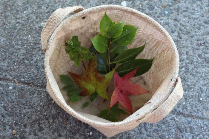 We walked around the neighborhood collecting specimens—leaves from trees, wild herbs, flowers, and perennial vines–to put the garden apps through their paces. Our neighbors Steven and Minna, who drove by while we were snipping leaves from a tree, rolled down the car window to shout helpfully, &#8