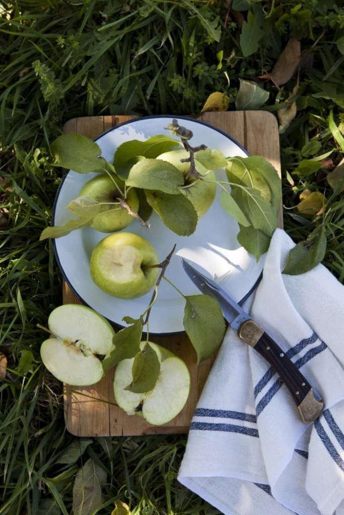 700_nicole-franzen-apple-picnic