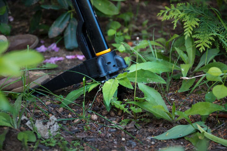 My husband using the Fiskars Uproot Weed Remover.