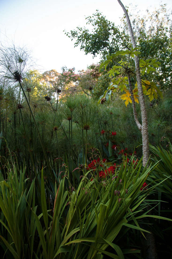 Ayrlies-New-Zealand-10-Gardenista