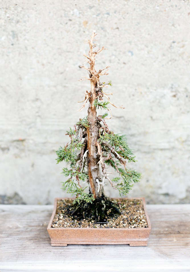Ask The Expert Bonsai Basics With Eric Schrader Gardenista