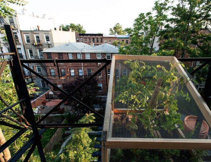 Chicken wire keeps squirrels at bay on a fire escape in Brooklyn, one of our Best Amateur Small Gardens in .