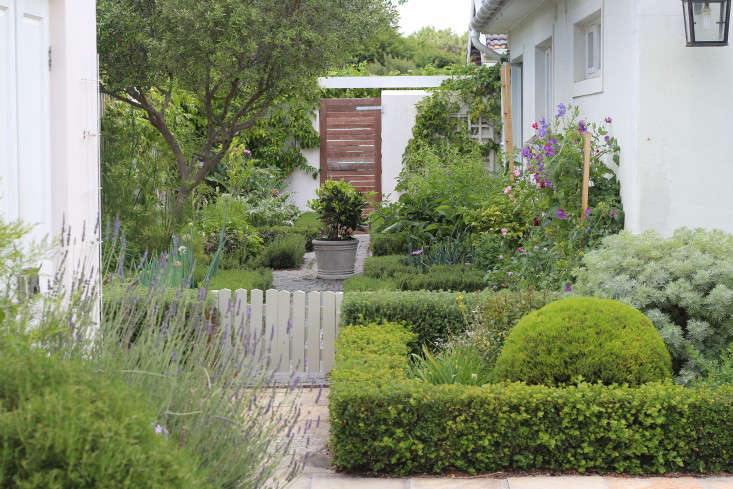 Cape-Town-garden-separation-hedges-gardenista