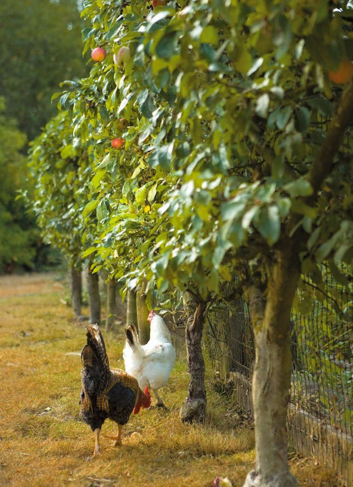 Photograph by Kate Baldwin via Free-Range Chicken Gardens.