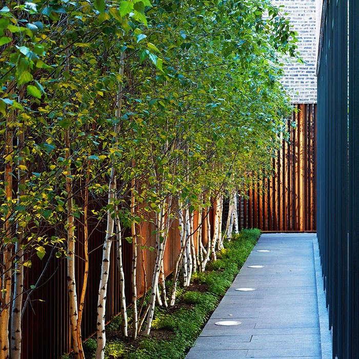Coen-Partners-splash-wood-Uplighting-Gardenista