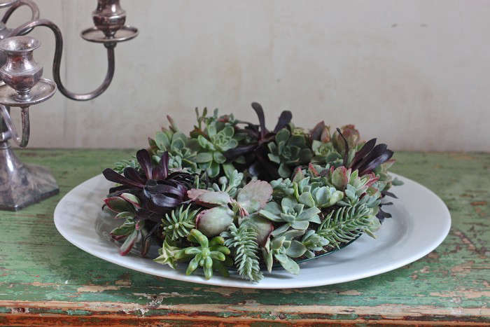 We love decorating the table with little potted succulents. Justine went a step further by turning those succulents into a wreath. Photograph by Justine Hand, from DIY: A Succulent Wreath to Display All Year.