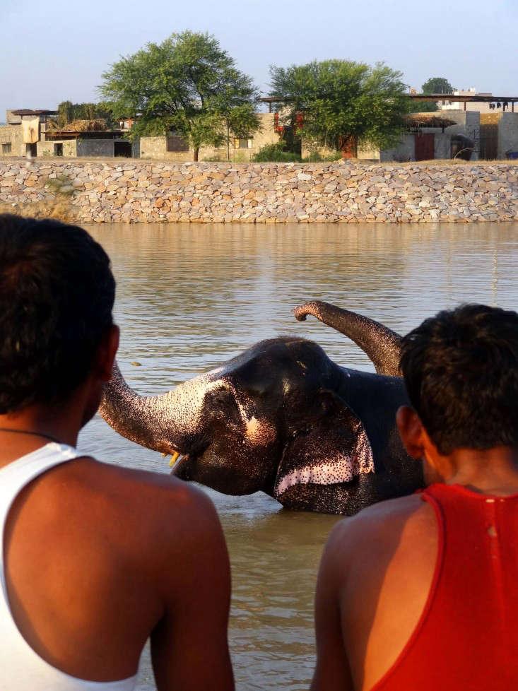 RMA Architects designed Hathigaon, a village for elephants and their caretakers near Jaipur, India.