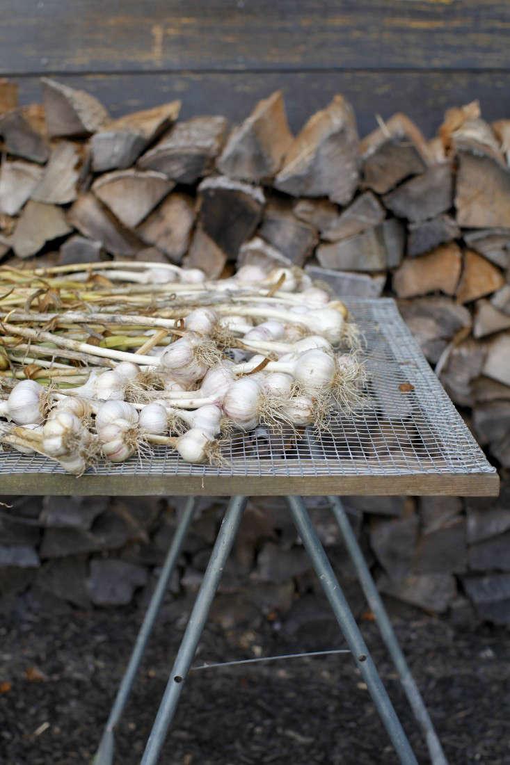 Garlic from the garden.