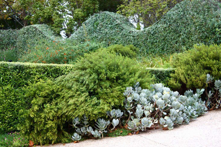 An undulating hedge in the Graphic Garden by Franchesca Watson in South Africa.  Photograph by Heidi Bertish.