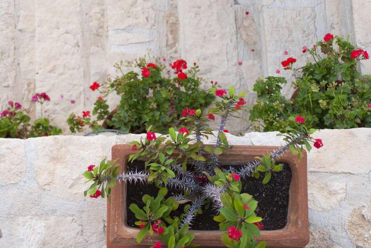 Greek-garden-Crete-Eleni-Psyllaki-17-gardenista