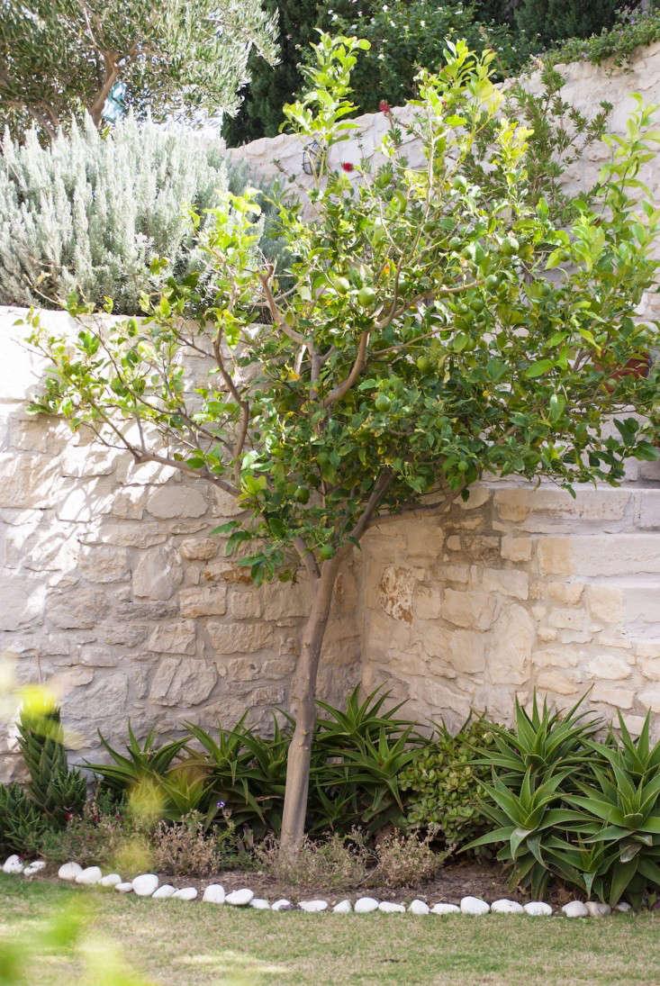 Greek-garden-Crete-Eleni-Psyllaki-18-gardenista