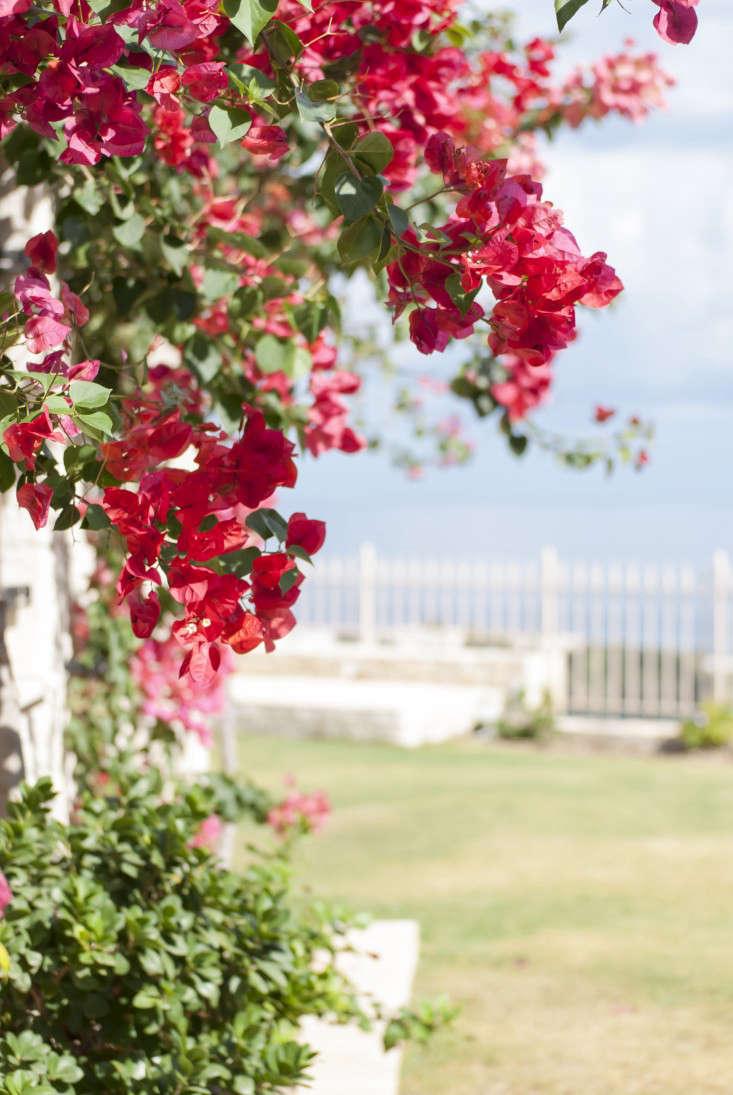 Greek-garden-Crete-Eleni-Psyllaki-2-gardenista