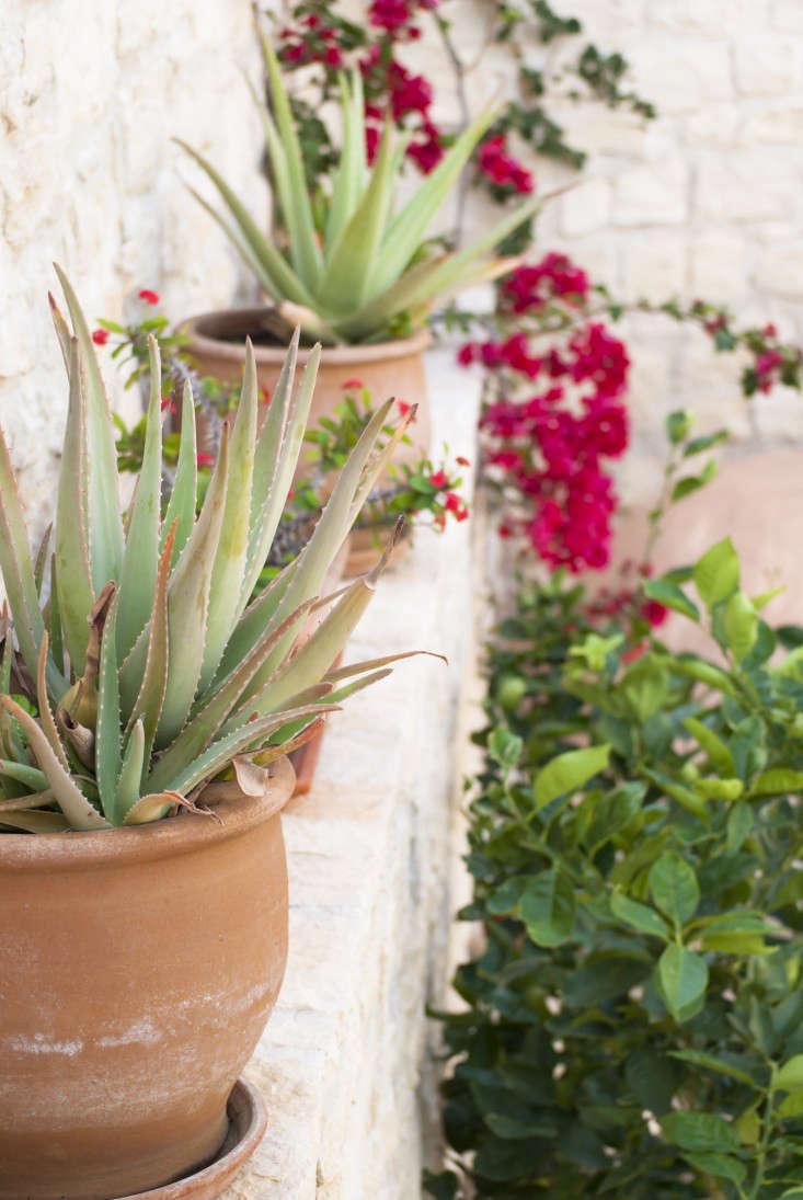 Greek-garden-Crete-Eleni-Psyllaki-20-gardenista