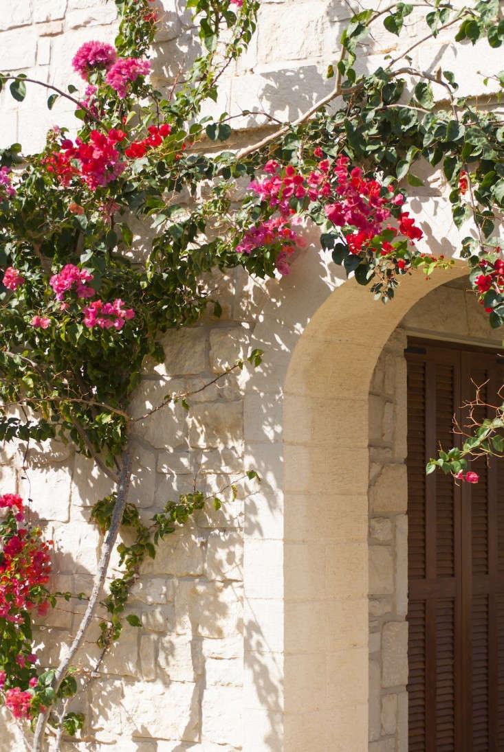 Greek-garden-Crete-Eleni-Psyllaki-7-gardenista-1