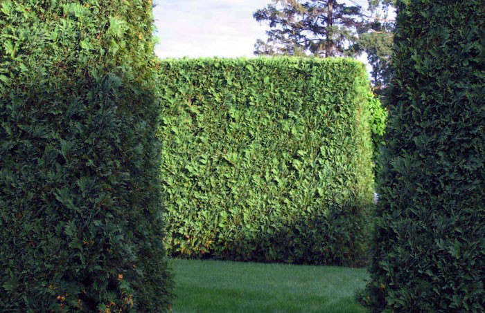 Impressive wedge-shaped hornbeam hedges in a garden designer&#8