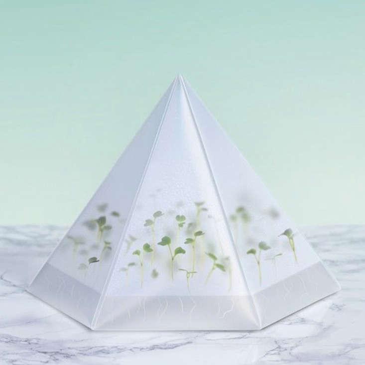Infarm-Microgreens-Kit-enviro.jpg