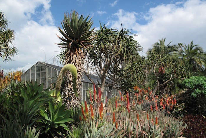 Janet-Hall-Huntington-Desert-Garden-Greenhouse