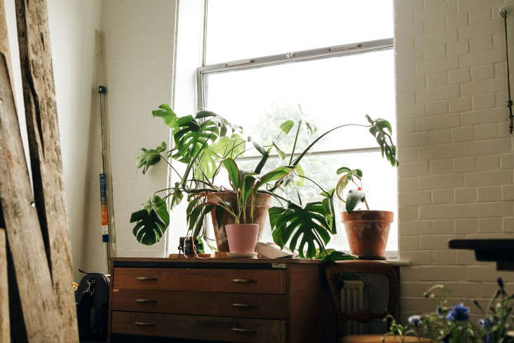 A split-leaf philodendron hogs the scene in Emma's Palais Flowers studio