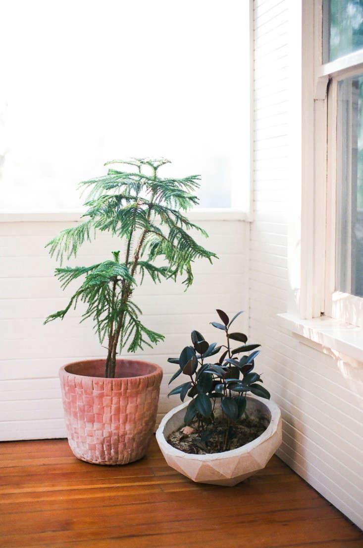 Kathleen-Whitaker-Echo-Park-Garden-Indoor-Plants-Gardenista-03