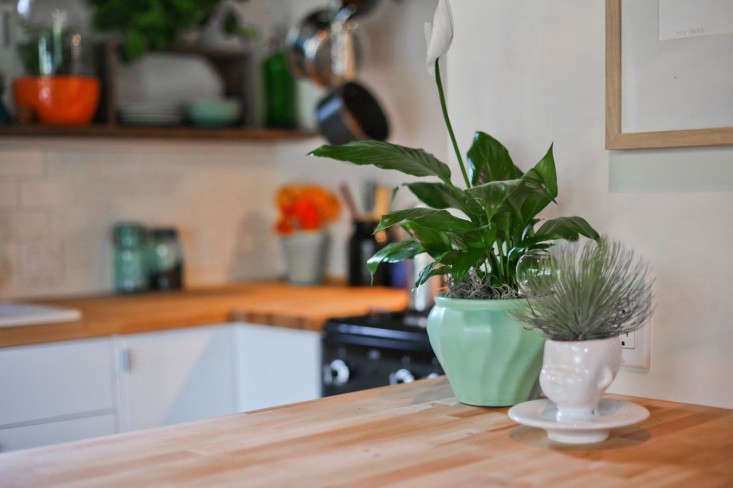 LA-garage-cottage-remodel-pottedstore-planters-Gardenista