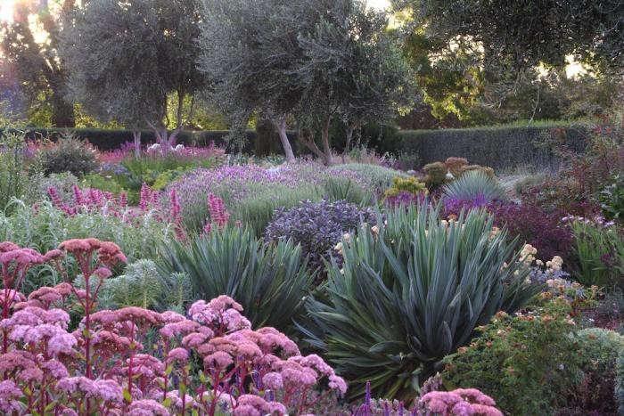 Lambley_Nursey_Drought_Tolerant_Garden_Gardenista
