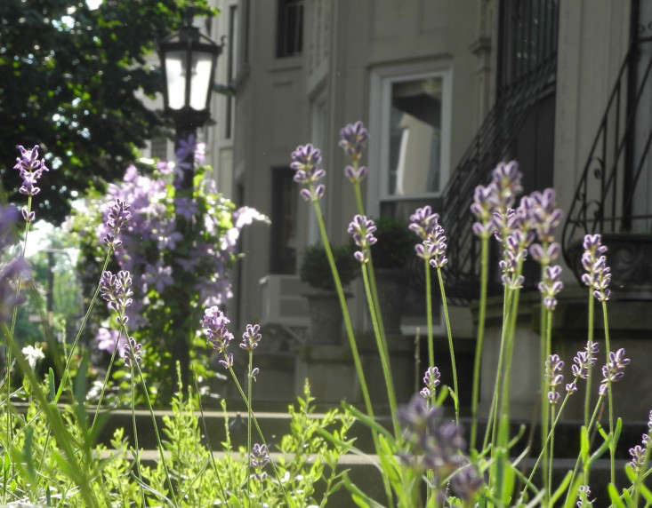 For more about lavender, see Required Reading: The Lavender Lover&#8