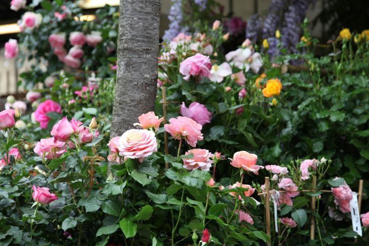 Marche-aux-Fleurs-Gardenista-12-gardenista