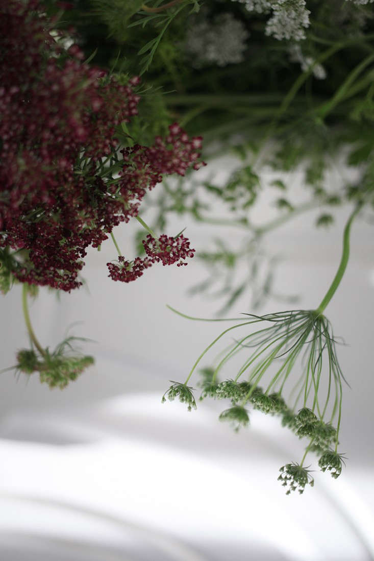 Sophia_Moreno_Bunge_Gardenista_Arrangement_QueenAnne'sLace